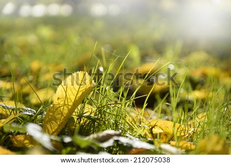 Autumn leaf on green grass, shallow depth of field  - stock photo