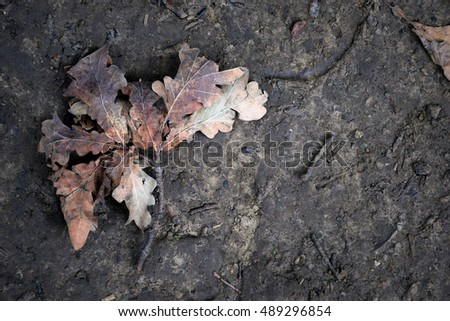 Autumn leaf on the ground