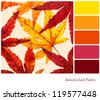 Autumn leaf palette with complimentary colour swatches - stock photo