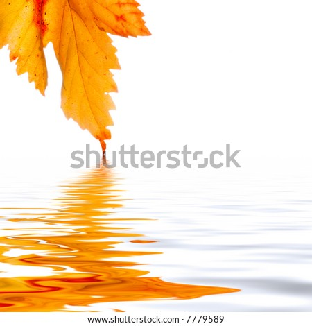 autumn leaf reflection - stock photo