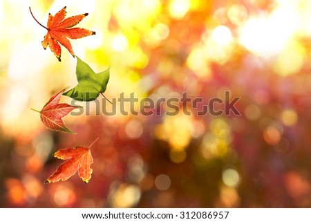 Autumn Leaf. Season Concept. Can be Use for Background