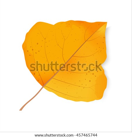 Autumn leaf. The foliage of poplar. Back to school. Change of seasons. Halloween. Bright design elements on a white background. Raster illustration. - stock photo