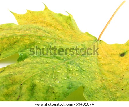 Autumn leaf with a water drops - stock photo