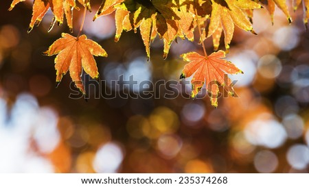 Autumn Leaf With Beautiful Autumn Background