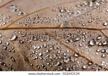 autumn leaf with dew