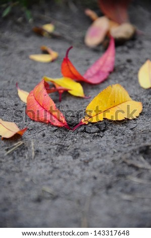 autumn leafs on ground - stock photo