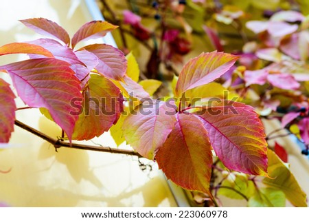 Autumn leafs, yellow and red. outdoor photo on daytime - stock photo
