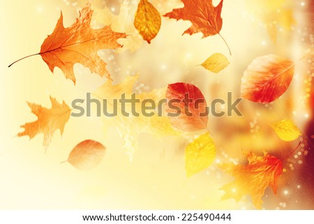 Autumn leaves. - stock photo