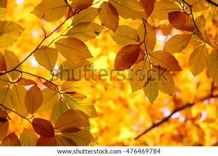 autumn leaves abstract background, selective focus