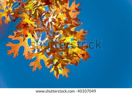 Autumn Leaves Against a Bright Blue Sky