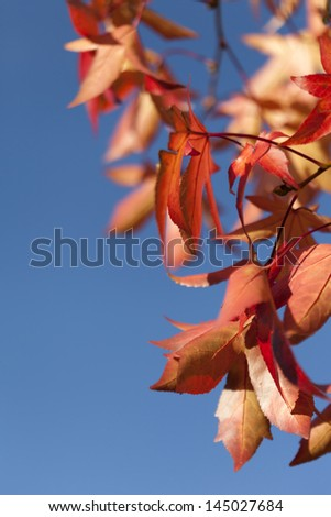 Autumn leaves against clear blue sky with shallow DOF - stock photo