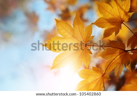 autumn leaves against the blue sky - stock photo