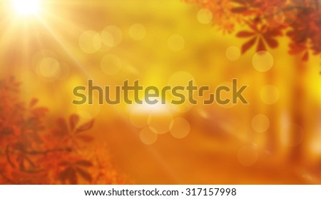 Autumn leaves against walkway along lined trees in the park - stock photo