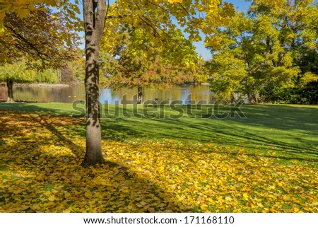 Autumn leaves and a tree near a pond - stock photo
