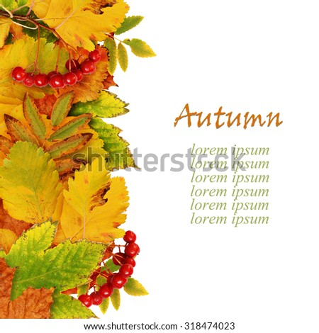 Autumn leaves and berries edge isolated on white