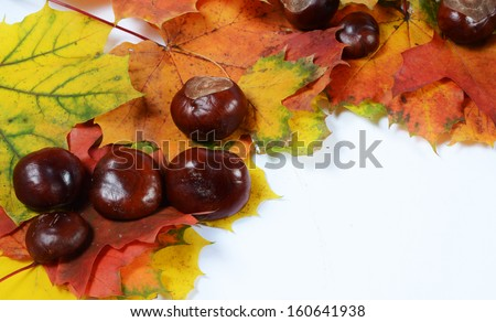 autumn leaves and chesnuts with space for your text