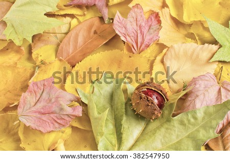 Autumn leaves and chestnut, autumn background - stock photo