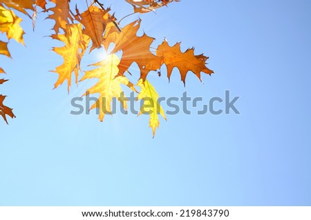 autumn leaves and sun rays - stock photo