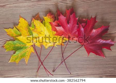 Autumn leaves arrangement - stock photo