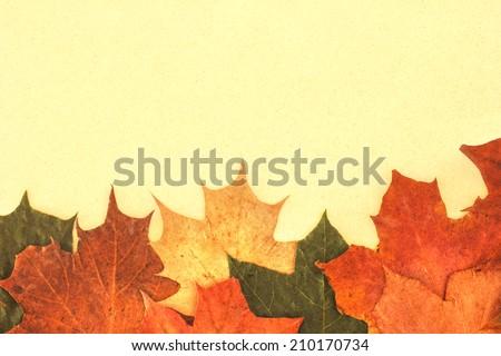 Autumn leaves./ Autumn leaves. - stock photo