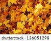 autumn leaves background - stock photo
