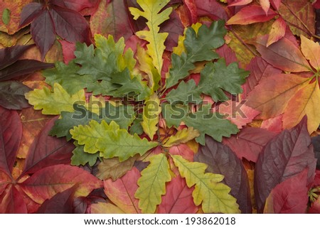 Autumn leaves background - stock photo