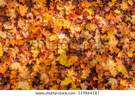 Autumn Leaves Background.  Colorful autumn
