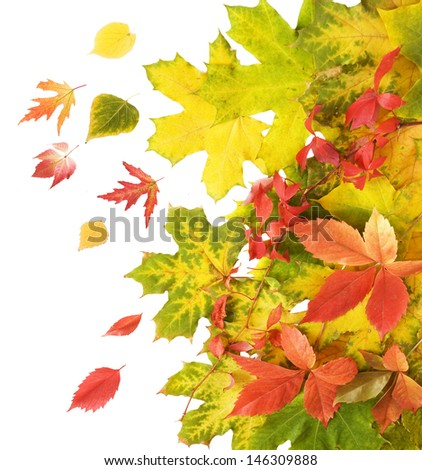 Autumn leaves background isolated on white