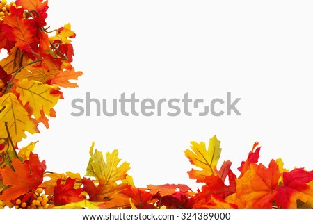 Autumn Leaves Background isolated on white background