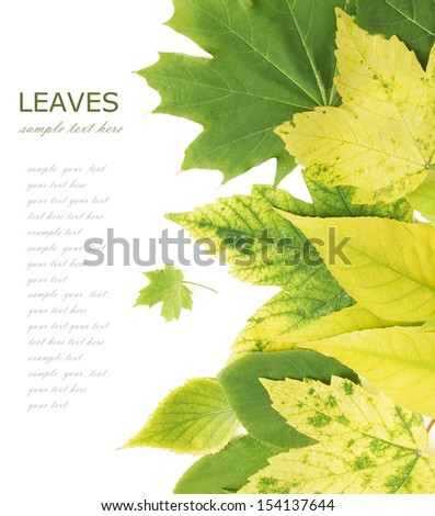 Autumn leaves background  isolated on white with sample text - stock photo