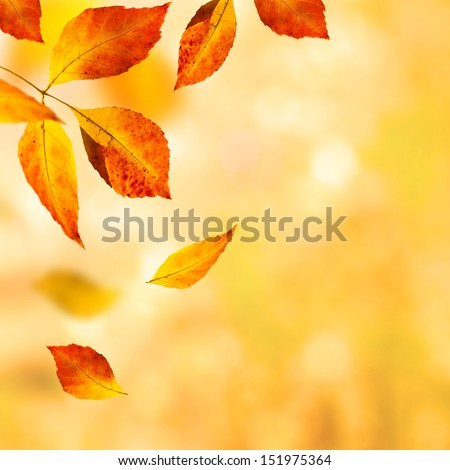 autumn leaves background. selective focus - stock photo