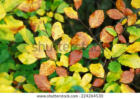 Autumn leaves background texture - stock photo