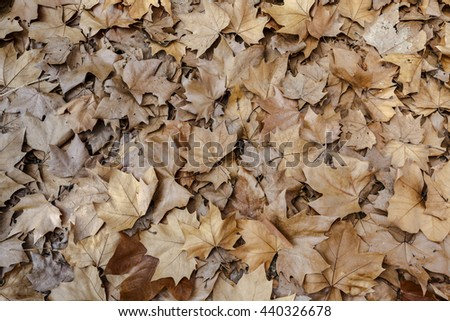 Autumn leaves background texture. Fallen foliage seasonal abstract photographed close-up of old autumn leaves lying on the ground. Maple Leaf Type - stock photo