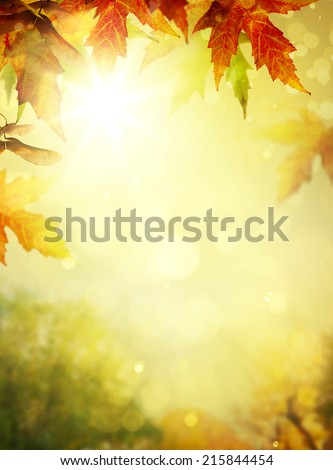 autumn leaves backgrounds; Colorful foliage in the autumn park  - stock photo