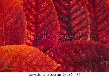 Autumn Leaves. Beautiful photos of autumn. The colors of autumn leaves