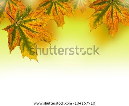 autumn leaves border - stock photo
