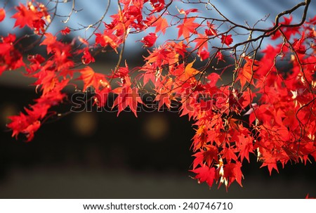 autumn leaves change the color in the Kyoto, Japan park view - stock photo