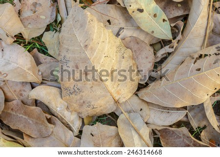 Autumn leaves collage, dry leaves texture - stock photo