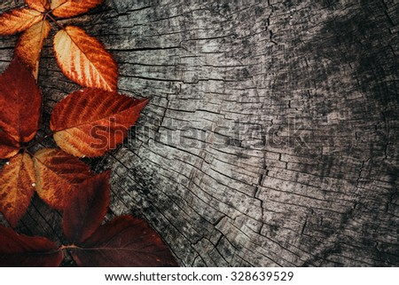 Autumn leaves. Fall red leaves on tree bark. Nature background