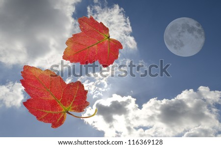 autumn leaves falling before a moon and bright sky - stock photo