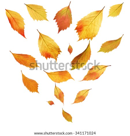 Autumn leaves falling down, isolated on white - stock photo