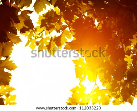 Autumn leaves frame, photo of sunlight through fresh grape leaves, natural background, orange autumnal foliage border, winery industry, copy space, trees in the fall and bright yellow sun beam - stock photo