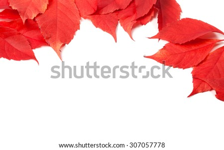 Autumn leaves frame (Virginia creeper leaves). Isolated on white background. - stock photo
