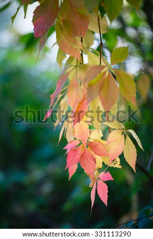 Autumn leaves hanging from branch