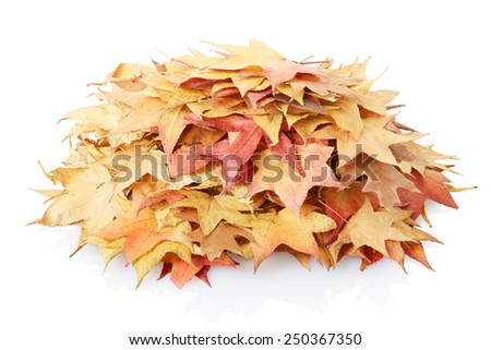 Autumn leaves heap isolated on white, clipping path included - stock photo