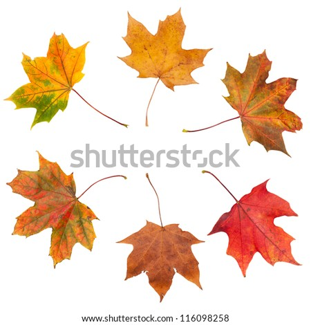 Autumn leaves in a circle on white background - stock photo