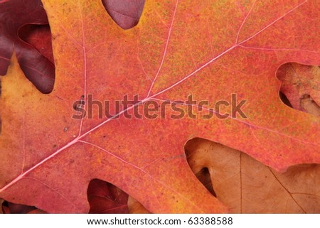 Autumn leaves in close up