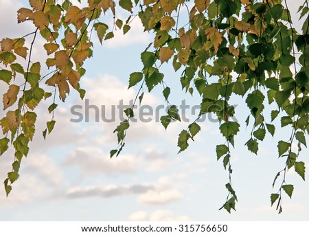 autumn leaves in forest closeup - stock photo