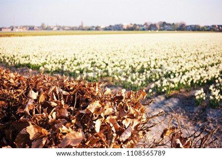 Autumn leaves in front of a flower field in early spring