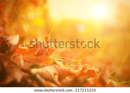 Autumn leaves in grass. Autumn theme. - stock photo